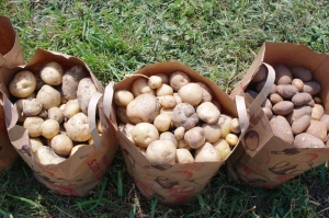 baggedpotatoes